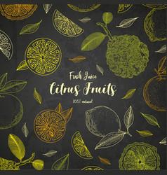 organic citrus fruit banners engraving sketch vector image