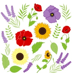 Provence Flowers vector