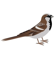 Realistic sparrow bird vector