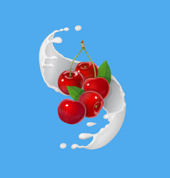 Red cherry fruits and milky splash vector
