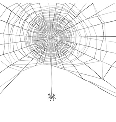 Spider web isolate vector