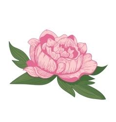 Vintage peony flower vector