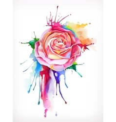 Watercolor painting rose flower vector image vector image