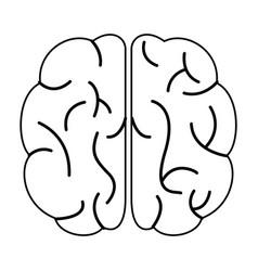 brain human organ top view outline vector image