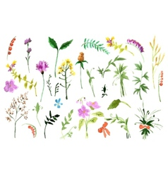 Wild flowers collection vector image vector image