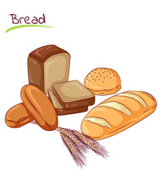Various bread loafs vector
