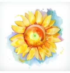 Watercolor painting sunflower vector image