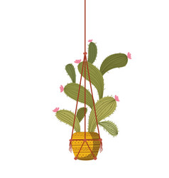 Cactus on macrame hangers isolated icon vector