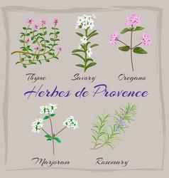 herbes de provence thyme savory oregano vector image