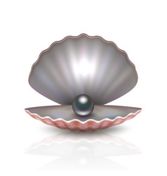 realistic 3d beautiful natural opened pearl vector image