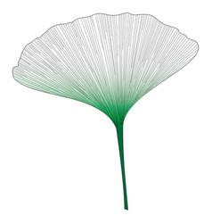 botanical series elegant single ginkgo leaf 2 vector image