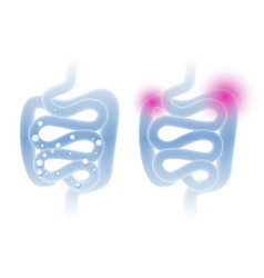 abstract intestine in a light blue vector image vector image