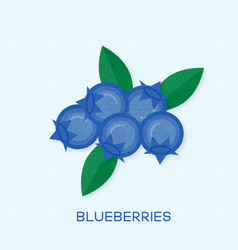creative group of blueberries vector image