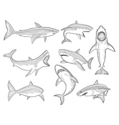 ocean shark big sea fish silhouettes flowing vector image