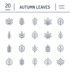 Autumn leaves flat line icons leaf types rowan vector