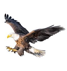 Bald eagle attack swoop vector