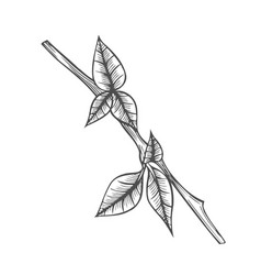 branch of plant vector image