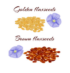 Flaxseeds and purple flax flower vector