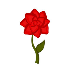 isolated rose flower icon vector image