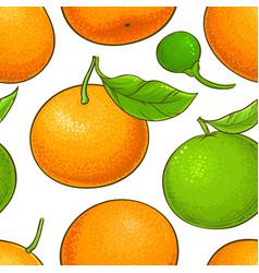 mandarin fruit pattern on white background vector image