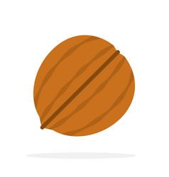 One whole walnut vector