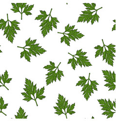 seamless pattern with hand drawn spice herb vector image