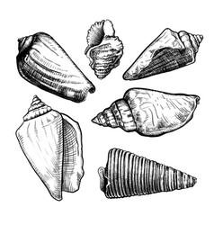 Seashells sketch set vector
