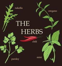 Organic herbs design set vector image