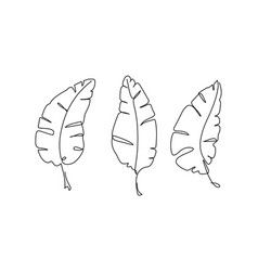 banana leaf continuous one line drawing line art vector image