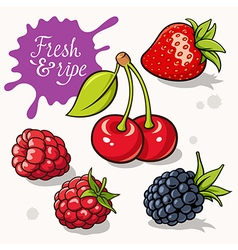 Berries set 001 vector