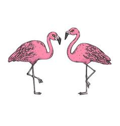flamingo bird color sketch engraving vector image