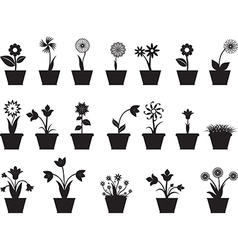 Flowers in pot vector image