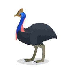 Full length portrait australian black ostrich vector