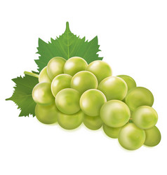 Green grapes bunch vector