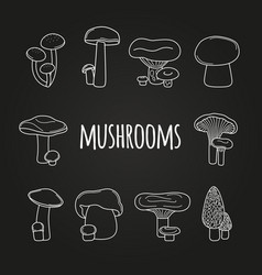 white line mushrooms on blackboard vector image