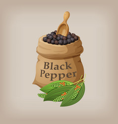 black pepper corn in the bag vector image