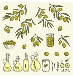 Hand drawn olive graphic set vector image
