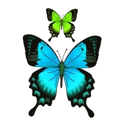 Bright beautiful blue and green butterfly vector image