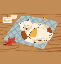 cute hand drawn cat sleeping on carpet surrounded vector image
