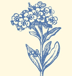 Forget me not vector image