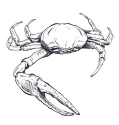 with a large sea crab-ghost drawn by vector image