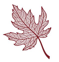 Autumn maple leaf vector