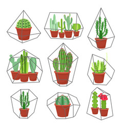 geometric florarium with succulents set vector image