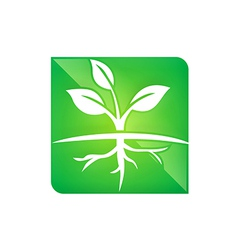 seed plant ecology root life logo vector image