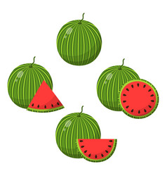set watermelon fruits isolated on white vector image
