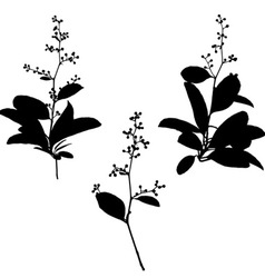 black silhouettes flower vector image vector image