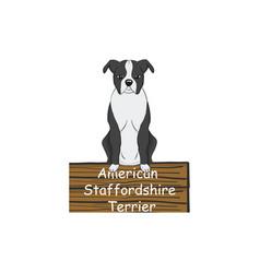 american staffordshire terrier cartoon dog icon vector image vector image