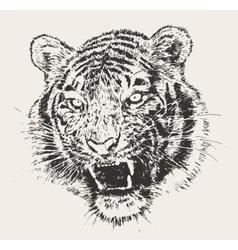 Tiger Head Engraving Hand Drawn Sketch vector image