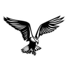 Bird prey in flight vector