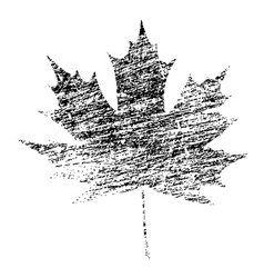 Black Grunge Maple Leaf vector image